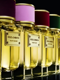 Dolce & Gabbana Velvet Collection Fragrances