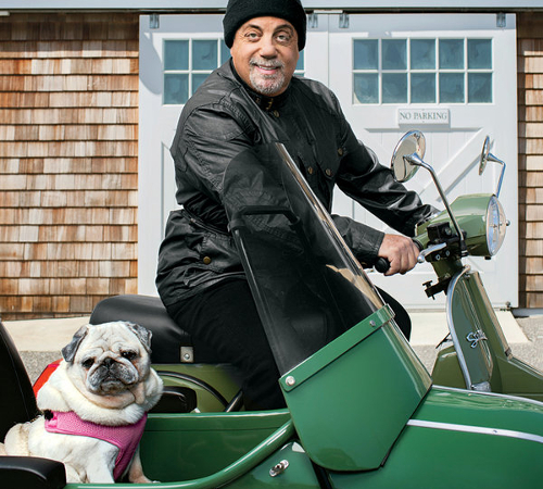 Billy Joel Pug