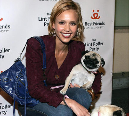 http://static.becomegorgeous.com/img/arts/2014/11/celebrities-who-have-pugs/embedded_jessica-alba-pug.jpg