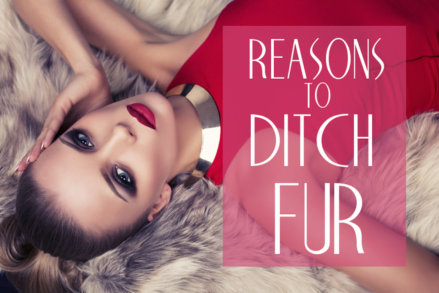 Reasons Not to Wear Real Fur