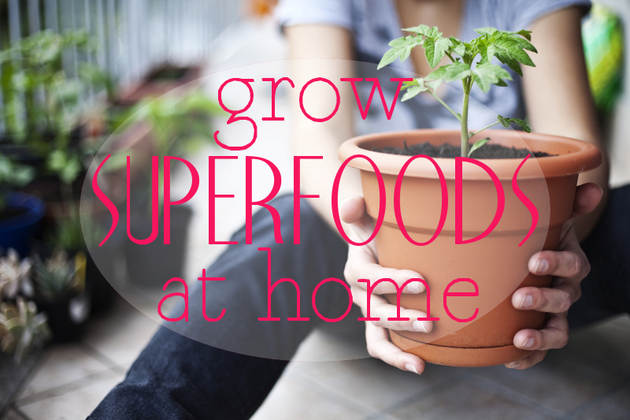 Superfoods You Can Grow at Home