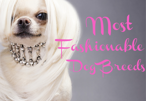 Meet The World's Most Fashionable Dogs