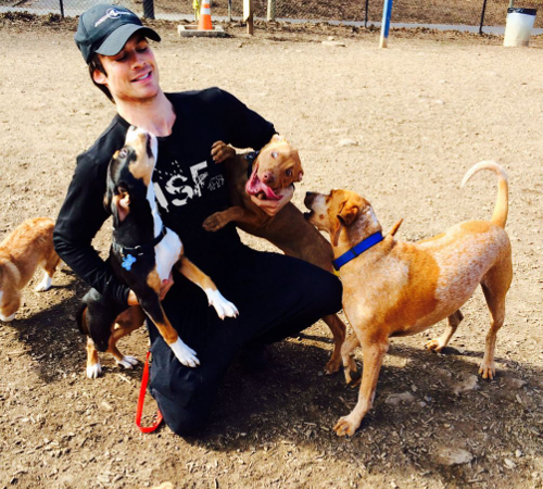 7 Celebrity Activists Who Love Helping Animals | Care2 ...