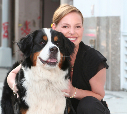 Katherine Heigl Dog