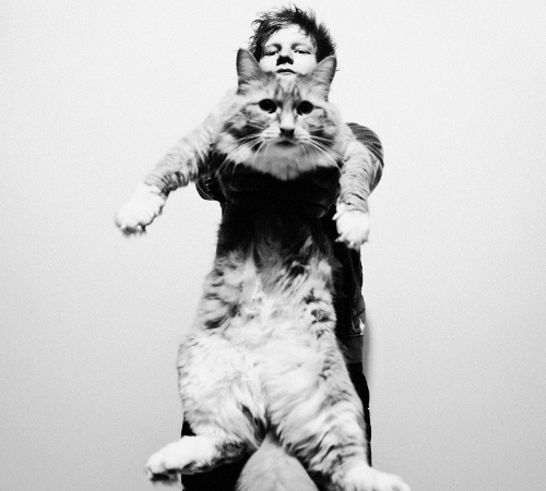 Ed Sheeran Cat Lover