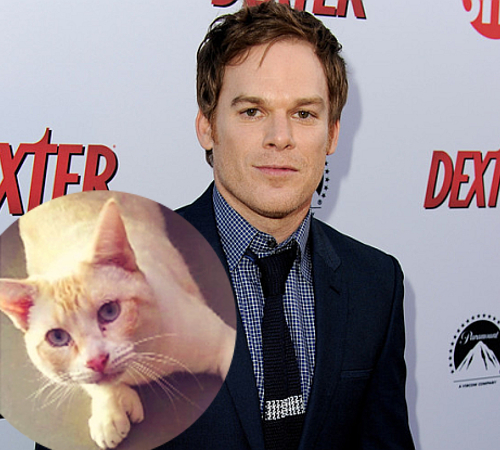 Michael C Hall Cat Lover