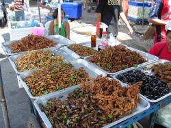 Eating insects for food